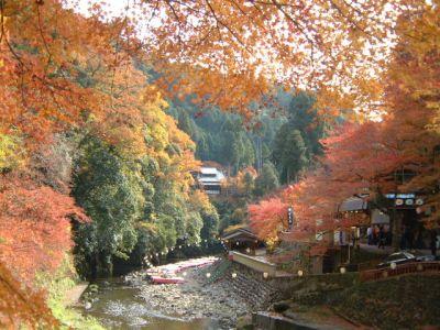 高雄橋で見かけた紅葉・黄葉/2002.11.22