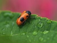 害虫をアロマで駆除してクリーンな環境を作りましょう