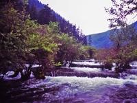 森の中を流れる川。九寨溝は ...