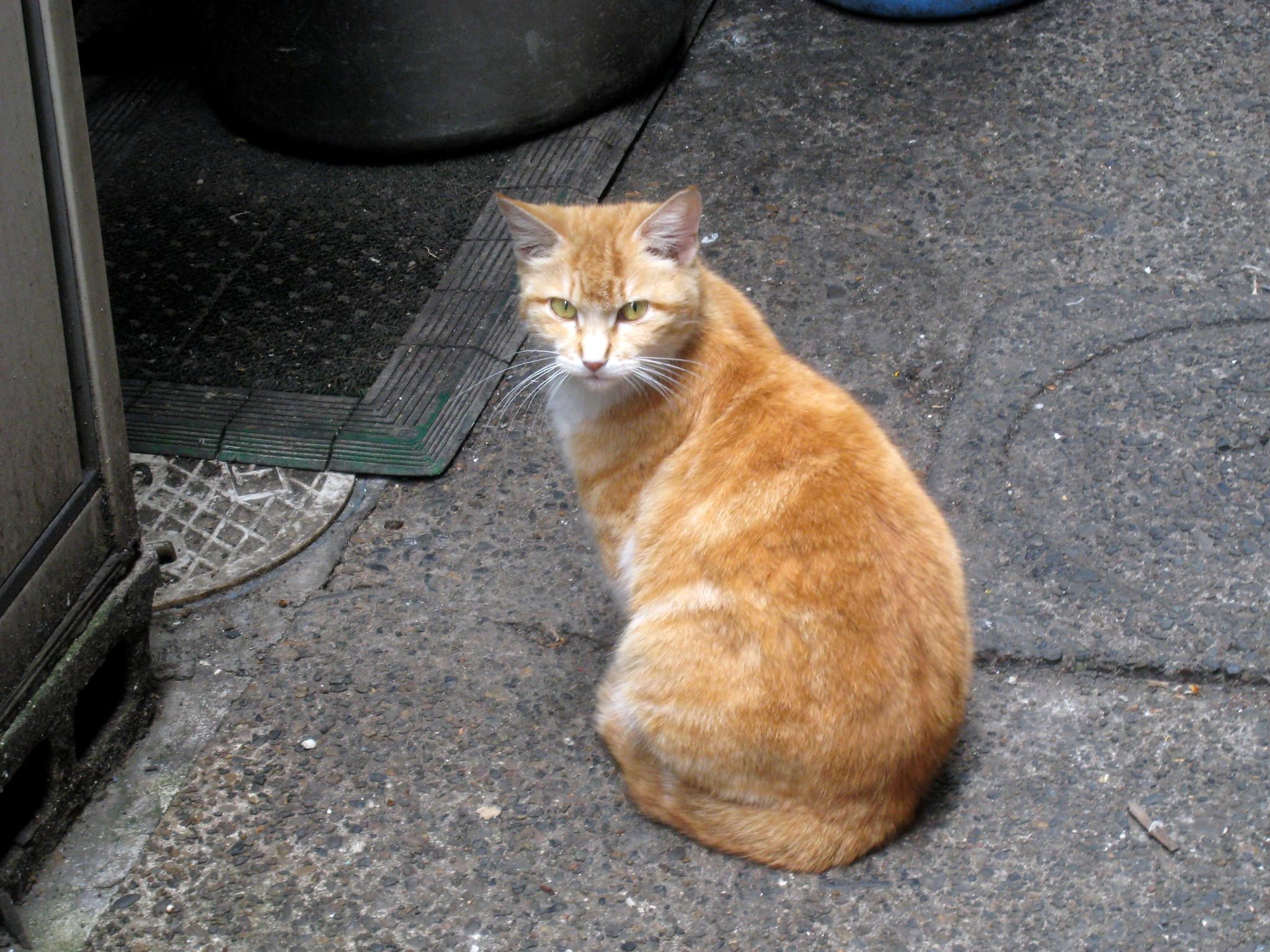 猫の画像 p1_38