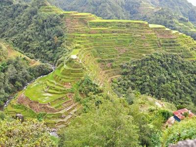 フィリピン・コルディリェーラの棚田群の画像 p1_1