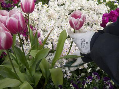 花の画像 p1_2