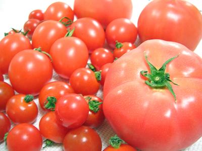 トマト 大玉トマト、中玉トマト、小玉トマトが勢ぞろいです。国内でよく食べられている野菜、「トマト