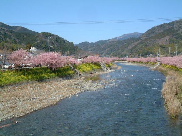 河津桜の桜並木