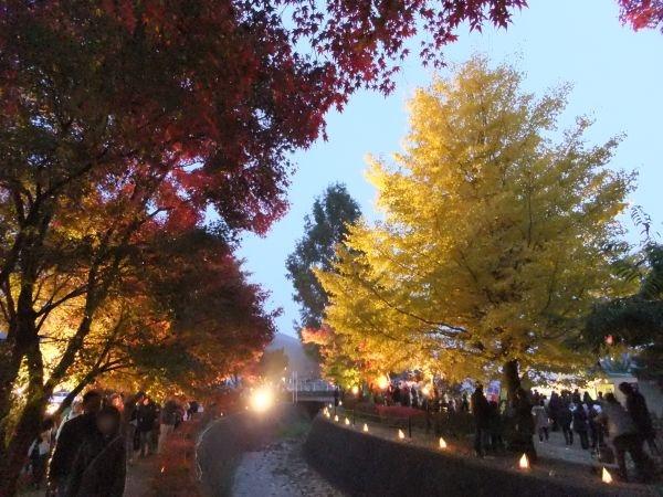 河口湖もみじ回廊の紅葉