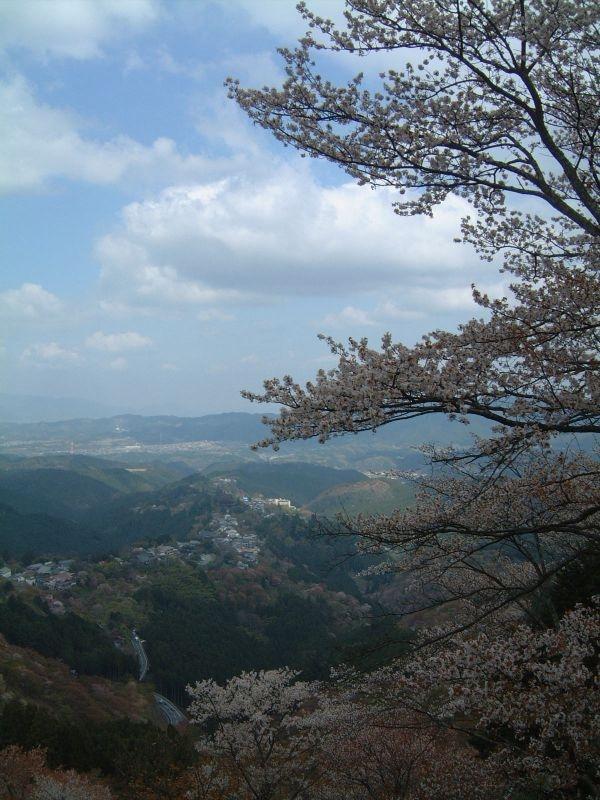 上千本・花矢倉展望台から、桜と共に中千本、下千本を望む