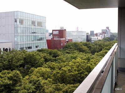 Keyaki overlooking the tree-lined