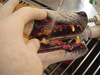 処置前の歯の様子
